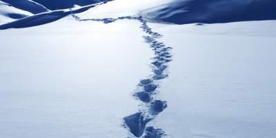 Ученые объяснили, кто такой снежный человек